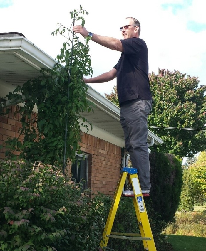 Tomatoes top house in township