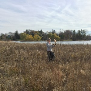 Krista Hughes cuts phragmite seed heads around Middle Lake. Photo provided