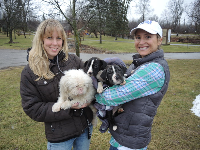 Show care for pups at Cupids and Canines