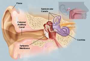 I dared not find any photos of earwax and ears -- too gross! But, I did find this drawing of the ear from WebMd.com. Enjoy