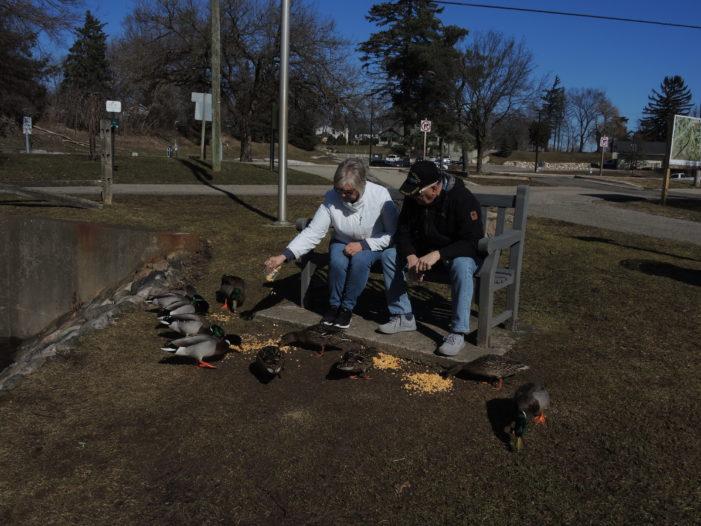 Spring for ducks