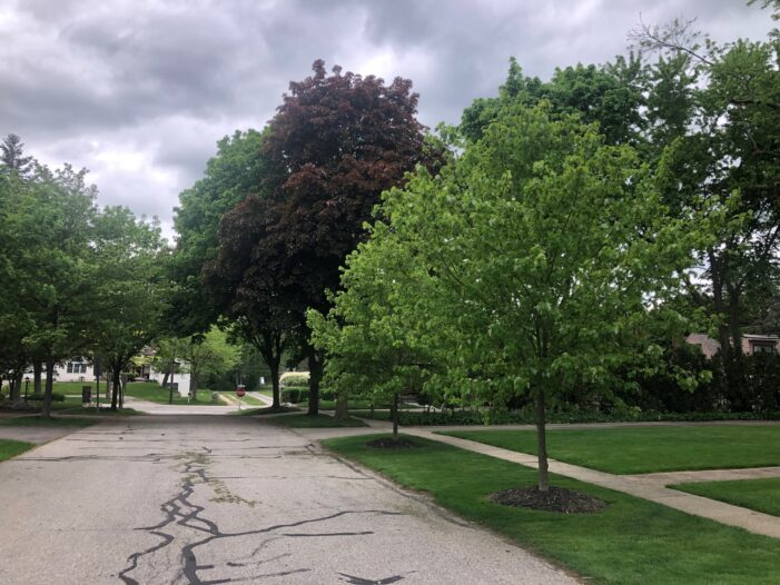 More trees in Clarkston, says mayor